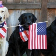 Dogs with an American flag