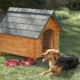 how to build a beginner dog house
