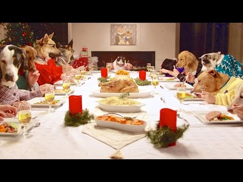 Dogs at Christmas Dinner