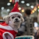 Holiday Gifts for Indoor Dogs