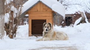 Provide an insulated dog house for your dog
