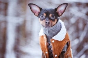 Cold weather care for your pups