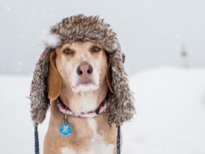 put a hat on your dog