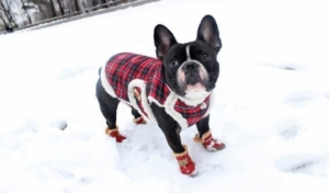 bundle your dog up for the winter